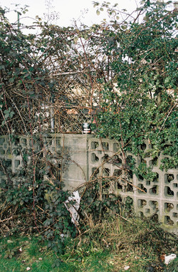 Bush and Fence, 2015