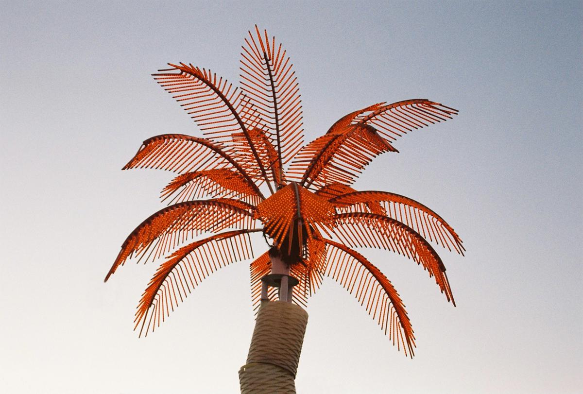 Neon Palm, 2014