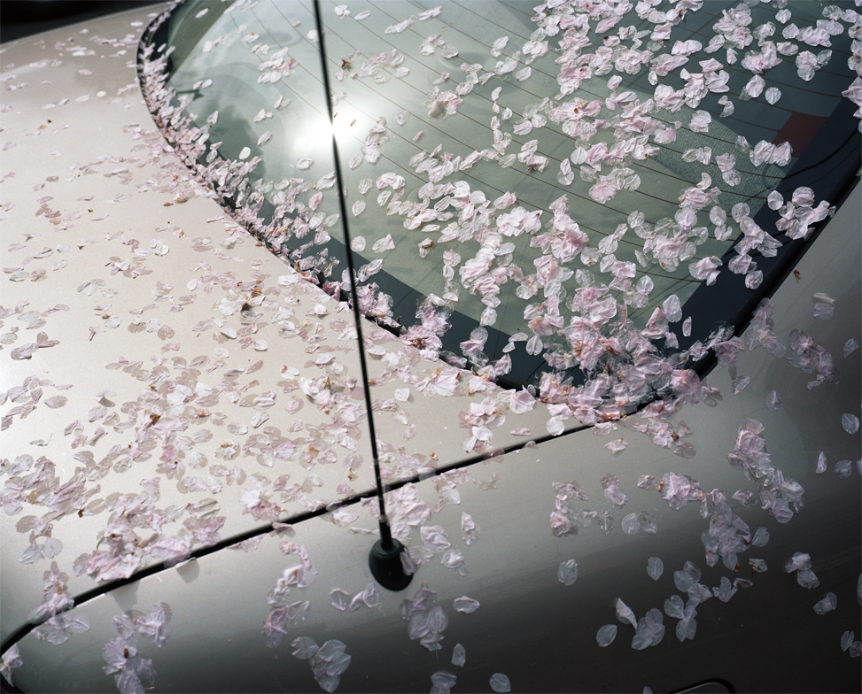 Blossoms on Car, 2015
