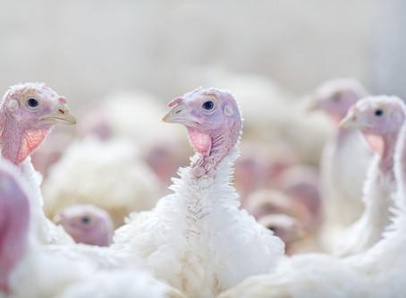 Highly Pathogenic Avian Influenza Detected in South Carolina Flock