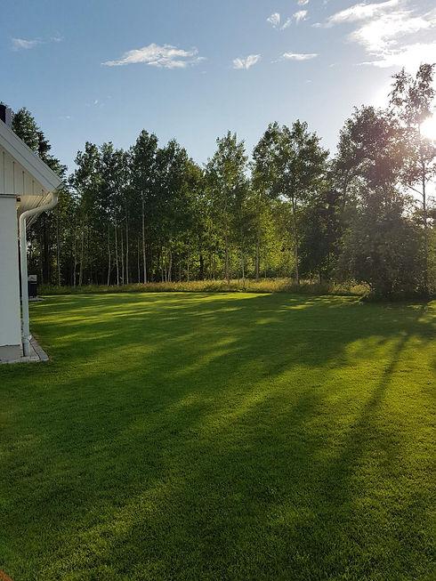 ingers gräsmatta i Jönköping.jpeg