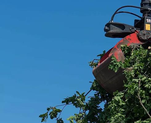 bortforsling av träd jönköping.webp