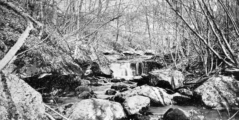 Near Chapman Falls.jpg
