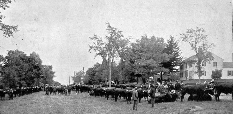 EH Grange Cattle Exhibit 1907.jpg