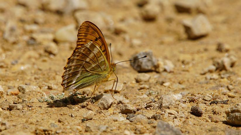 Butterflies08.JPG