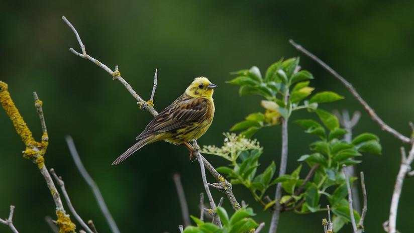 Birdtour03.JPG