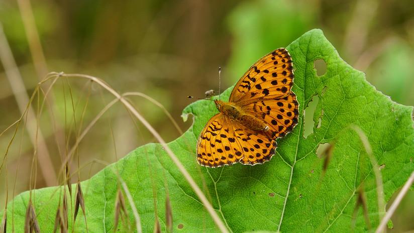 Butterflies03.JPG