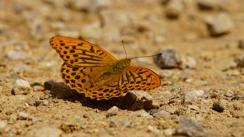 Butterflies07.JPG