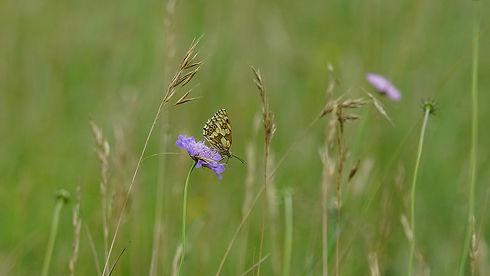 Butterflies04.JPG