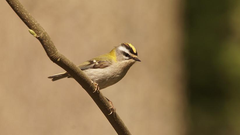 Birdtour02.jpg