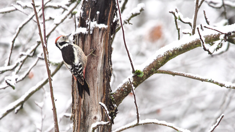 Birdtour11.jpg