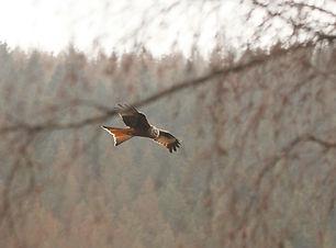 Birdtour01.JPG
