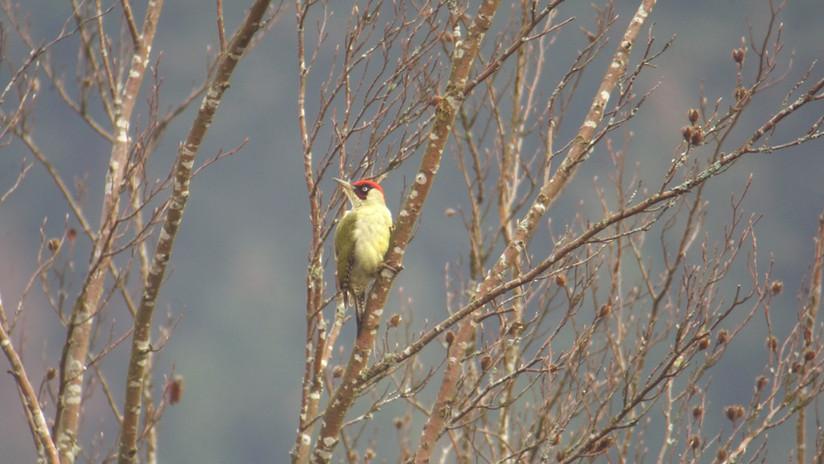 Birdtour09.jpg