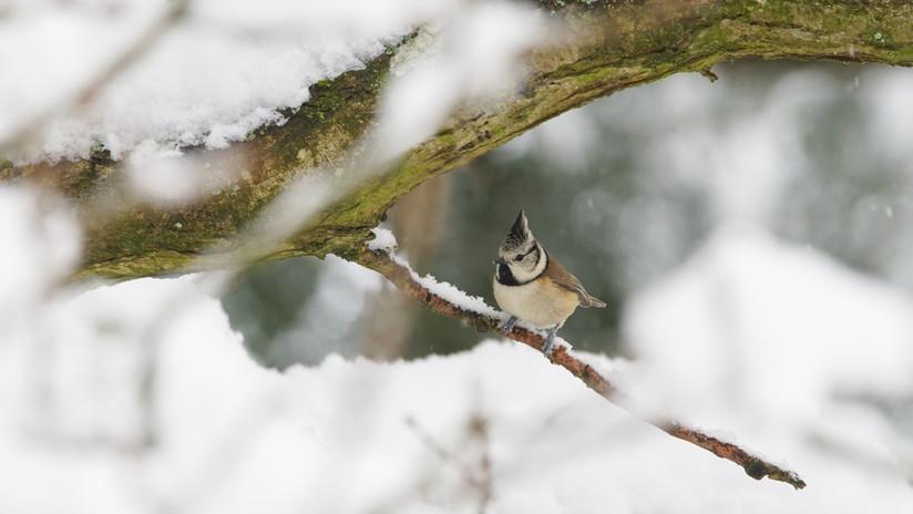 Birdtour05.jpg