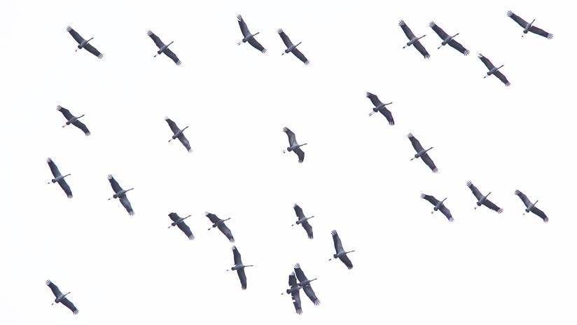 Birdtour06.JPG
