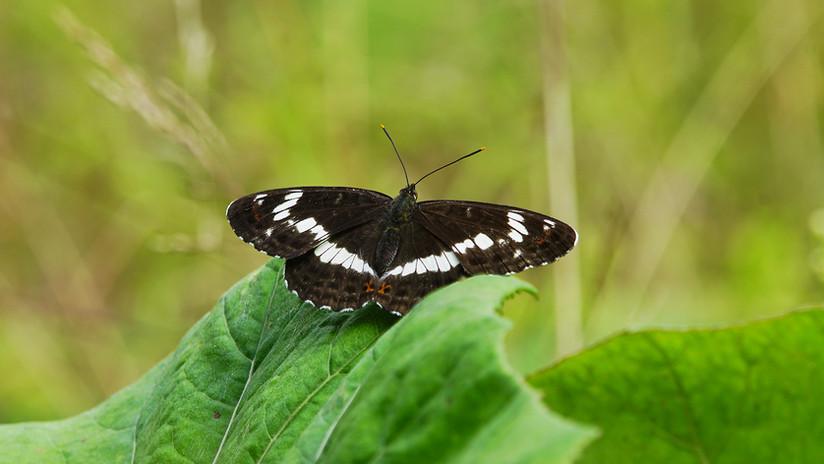 Butterflies09.jpg