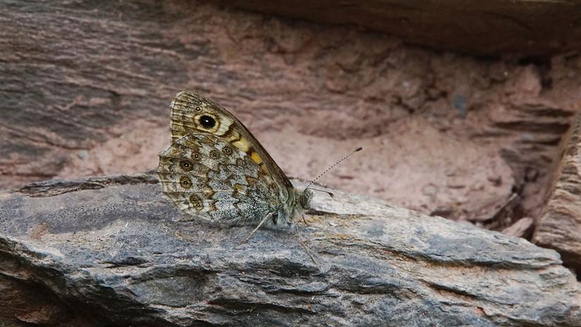 Butterflies12.jpg