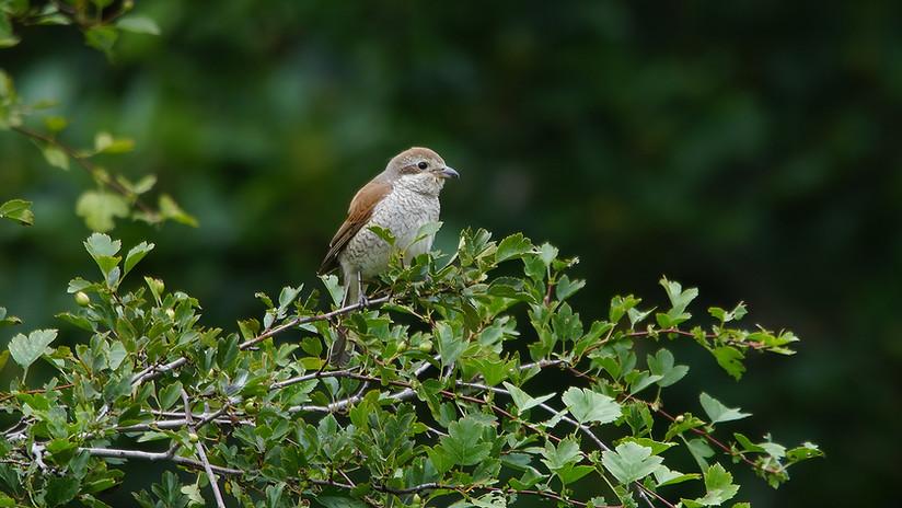 Birdtour04.JPG