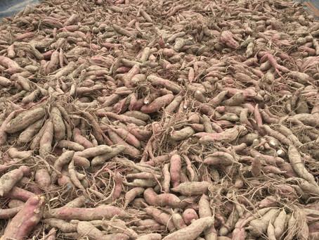 滋賀の6次産業化を促進して滋賀の農業を応援します♪