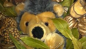 Hedgehog peekaboo
