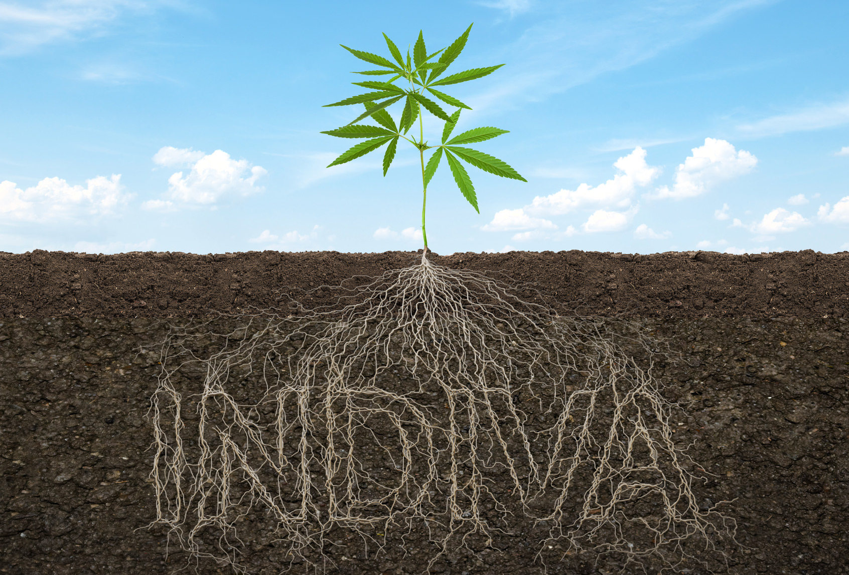 INDIVA Roots