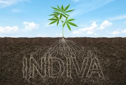INDIVA Roots