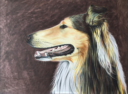 Dog portrait by Tom Wegrzyn