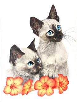 Cats portrait by Tom Wegrzyn
