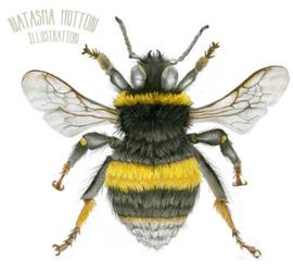 Bumble bee Illustration