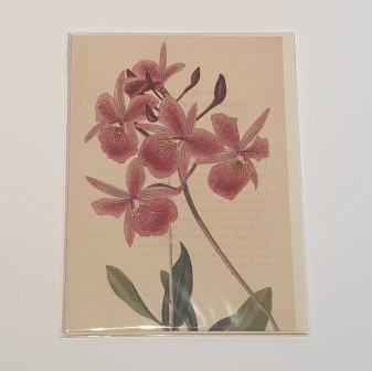 Flower Anthology Card