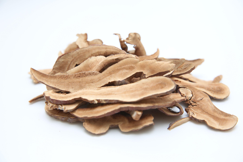 有機靈芝 Organic Reishi Mushroom