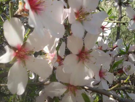 על הפרחים ועל יופי