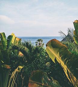 banana-leaves-blue-blue-sky-2546929.jpg