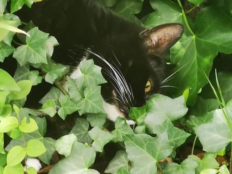 Chat Cherche - Photo Carole James