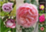 Photos site.jpg
