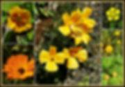 Fleurs oranges et Jaunes