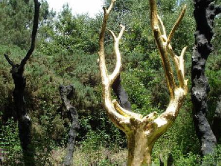 Une journée en pays de  Brocéliande. (Visite guidée, proposée par Paul Monin, Bio-Energéticien)