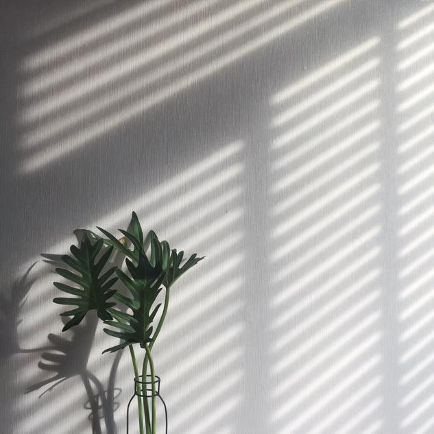 Cattleya Instagram Tile 4.png