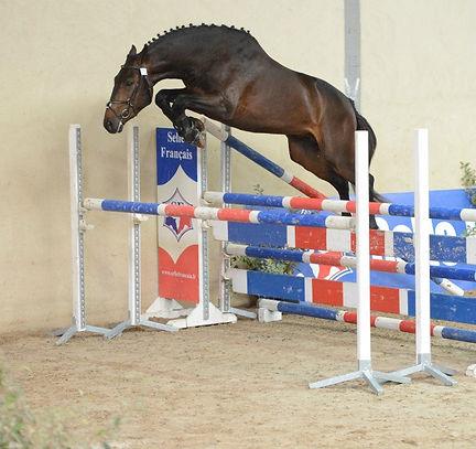 concours et évènements équestre, jeunes chevaux, stages en région PACA