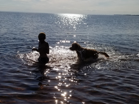 Kid and dog playing in the water at Blue Spruces