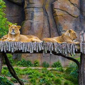 London Zoo 29.04.2019