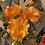 Thumbnail: Poppy Stem - Orange