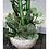Thumbnail: Silver Succulent Plant Stem