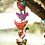 Thumbnail: Short Multi Colored Prosperity Bird Tota
