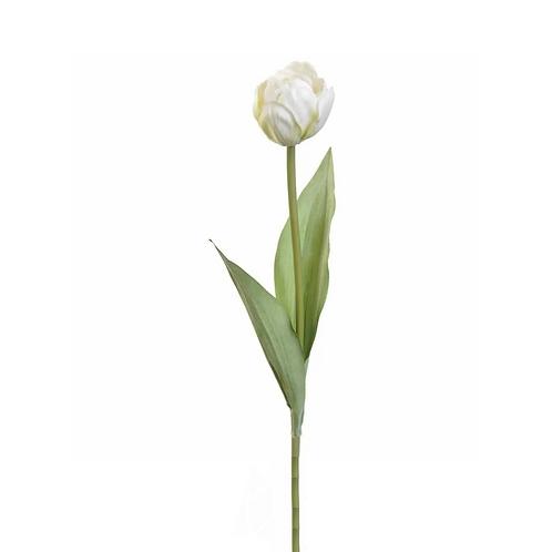 Tulip Stem - Cream
