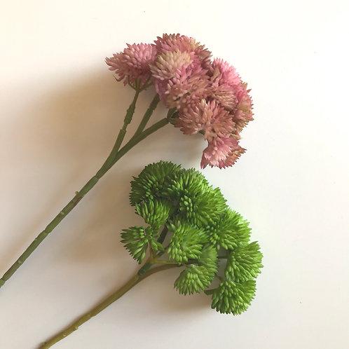 Sedum Flower Stem