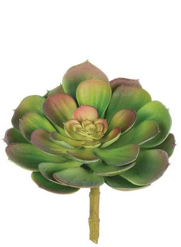 Green Echeveria Succulent Stem Lg
