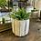 Thumbnail: Agave Succulent Green