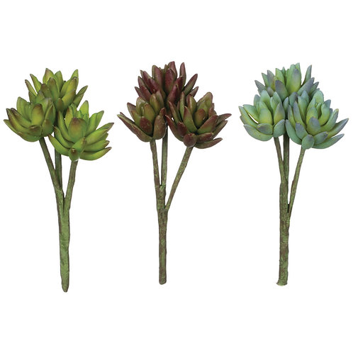 Agave Stem Succulent