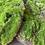 Thumbnail: Moss Pad